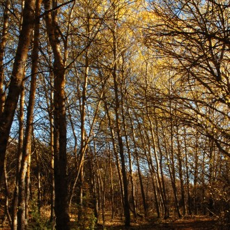 Le foto di Terranera - Pioppi in autunno