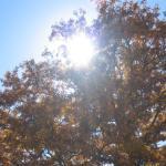 Cerri in autunno