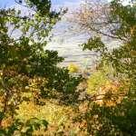 Le foto di Terranera - I tre alberi