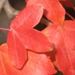 Le foto di Terranera - Foglie d'autunno