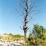 Le foto di Terranera - L'Alberello