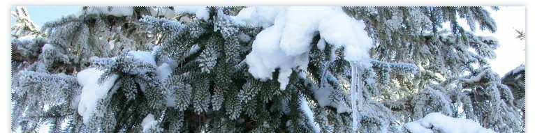 Terranera OnLine - Il freddo